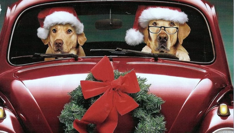 Christmas Labs In VW
